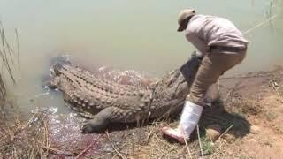 Mabula Pro Safaris   Trophy Nile crocodile hunt
