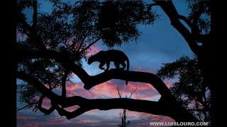 Luis Louro Photos - Africa