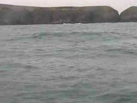 Dolphin Survey, Stonehaven, Scotland