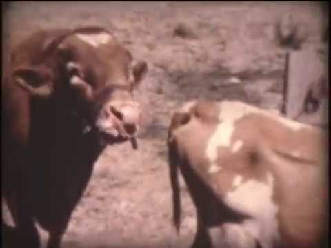 Dairy Farming in Oregon 1967 part 1 of 3
