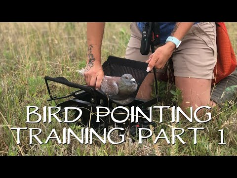 Pointing Birds: Upland Bird Dog Training - Part 1