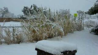 Snow in Yucca Valley - December 2008