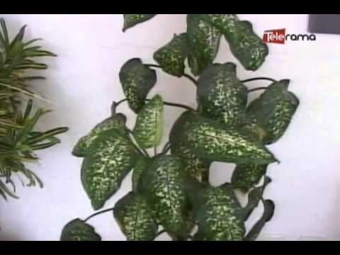 Decoraci n con plantas seg n feng shui youtube for Decoracion con plantas sinteticas