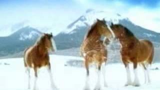 śmieszne konie. Oto co konie robią zimą !;d