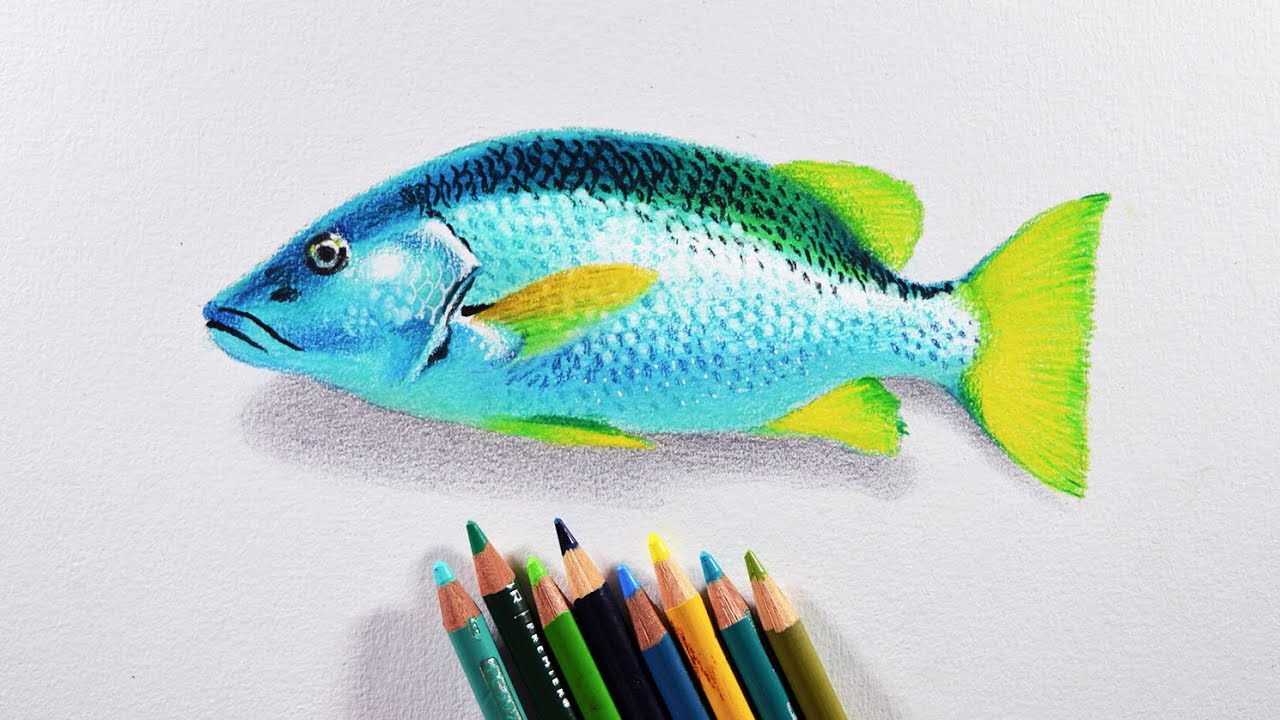 colored fish drawing akba greenw co