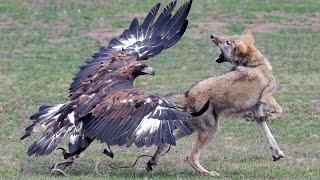 15 Deadliest Birds On The Planet