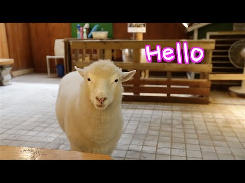 Sheep Cafe in Seoul