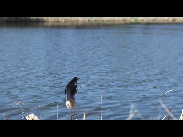 Birds 🐦: #TenSecondTuesday