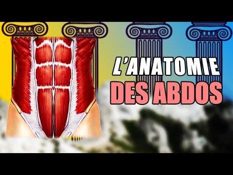 L'anatomie des ABDOMINAUX