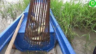 Đặt xà di mùa nước lên dở thấy ham l Fishing VIETNAM