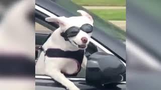 самое смешное видео о животных