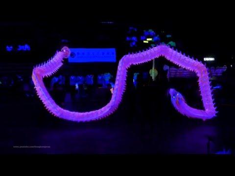 "2019-Jan-9 Crocodile World Hong Kong ""Luminous Dragon Dance"" Championship 2016 @ Hong Kong Coliseum"
