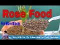 गुलाब के पौधे में कैसा खाद डाले / How to Feed Rose Plant for more bloom /  Mammal Bonsai Mp3