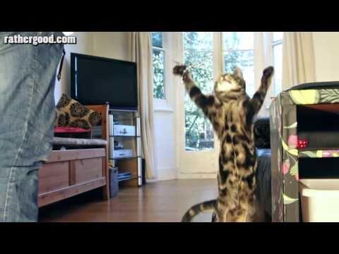 Kittens Super Slow Motion Dance