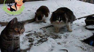 Отравление собак и кошек