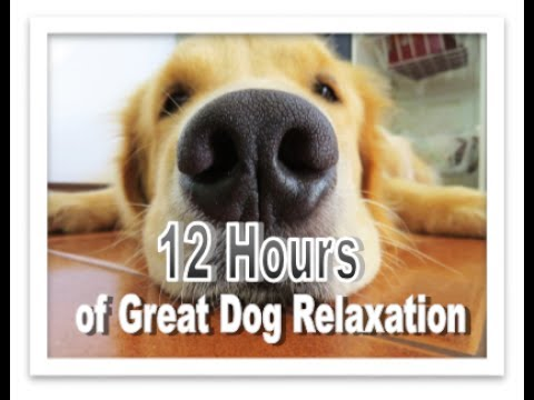 12 Hour Video Music To Relax Your Dog During Times Of Restlesness