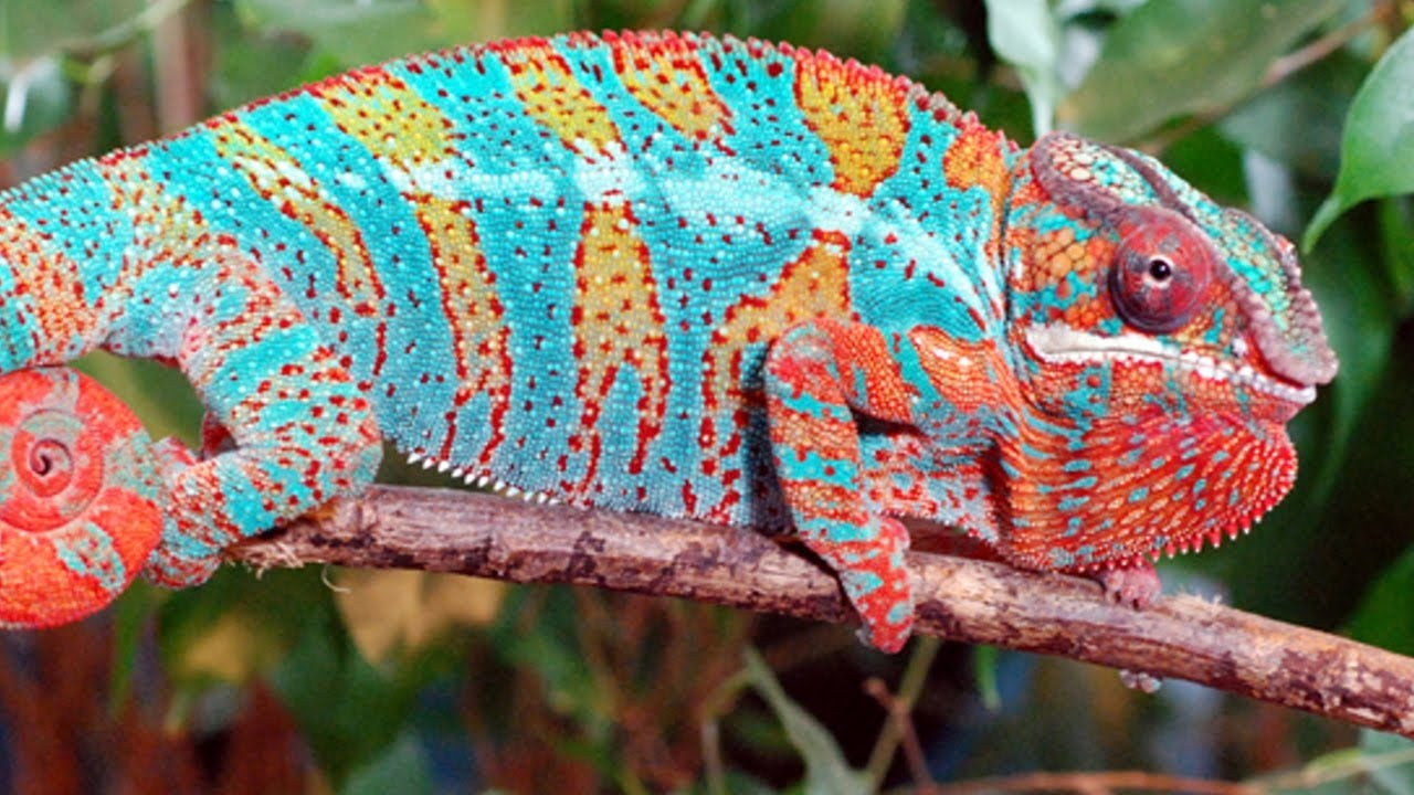 Top 5 Worlds Most Intelligent and Strange Color Changing Animals