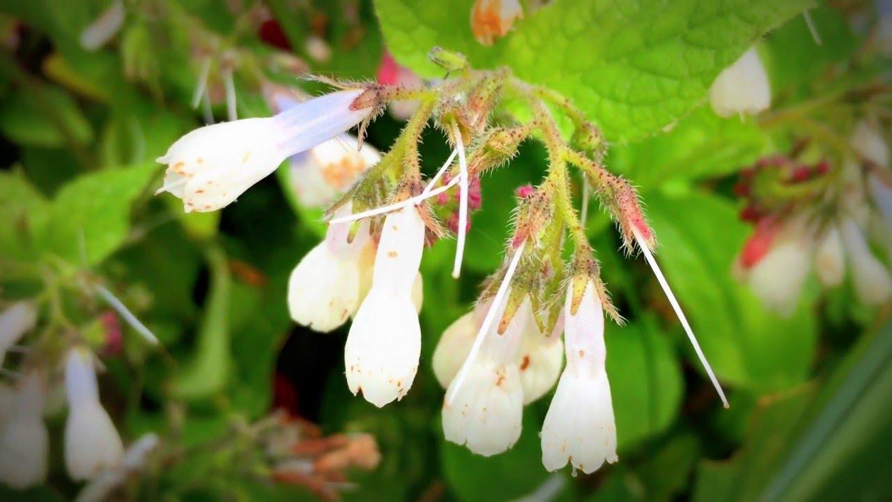 British spring blossoms white spring flower buds in garden british spring blossoms white spring flower buds in garden gardening spring flowers mightylinksfo
