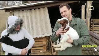 Zagorski poljoprivrednik uzgaja burske koze i romanovske ovce