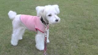 http://blog.goo.ne.jp/rosamasa/