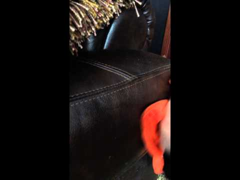 Leather being cleaned with furniture polish. Organic, natural cleaning products. Liquid Amber