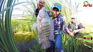 Pesca De Tilapias Grandes Con Anzuelo