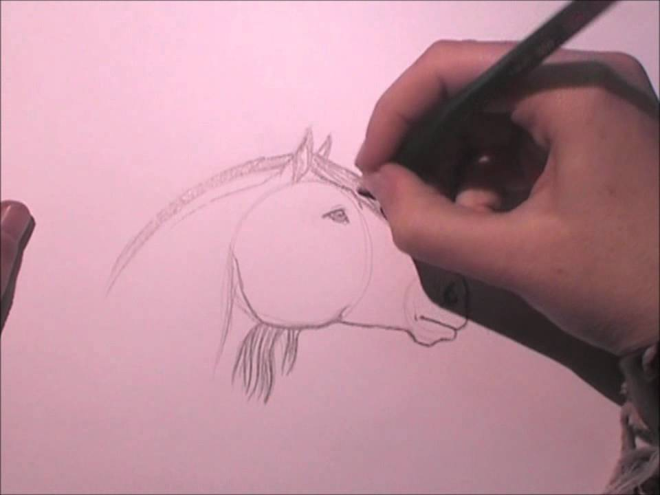 Tutorial de Dibujo  Cara de caballo  Horse face  YouTube