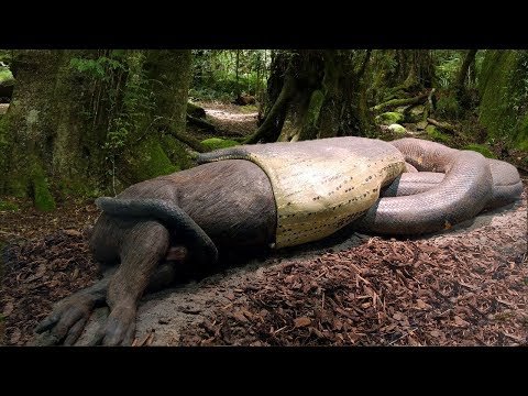 15 BIGGEST Snake Species In The WORLD!