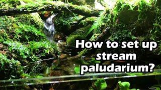Stream Aquaterrarium
