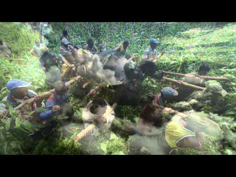 Titus Gorilla King documentary english in HD part 3