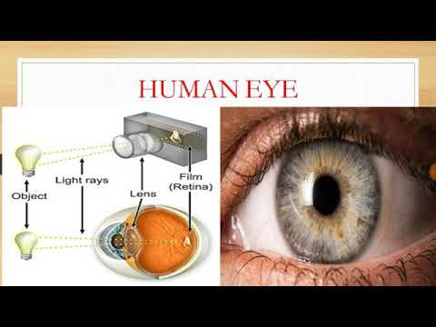 Human Eye Structure and Function✔✔