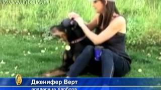 Обнаружена собака с рекордно длинными ушами