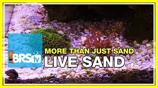 Week 12: Proof: Live Sand isn't as dull as you thought! | 52 Weeks of Reefing