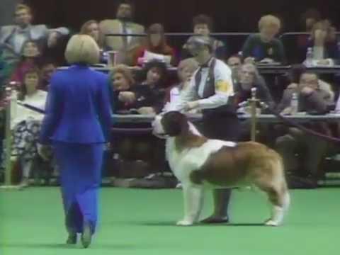 """118th-westminster-dog-show---st-bernard-""""boss"""""""