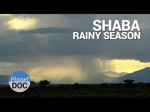 Shaba. Rainy Season | Nature - Planet Doc Full Documentaries