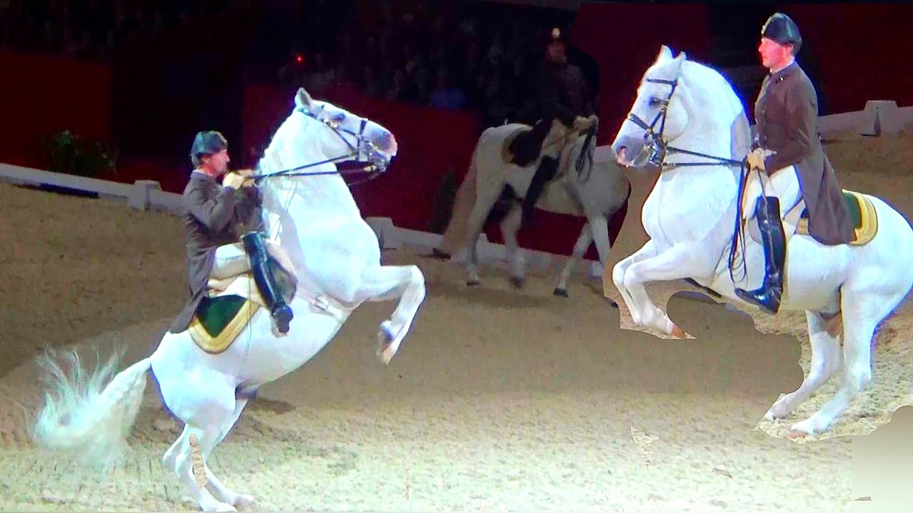 Spanish Riding School Vienna Lipizzaner Horse Performance London