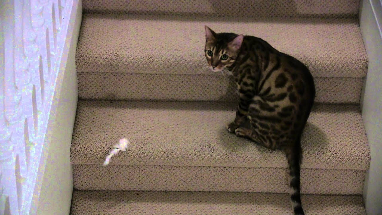 diy hidden cat litter box