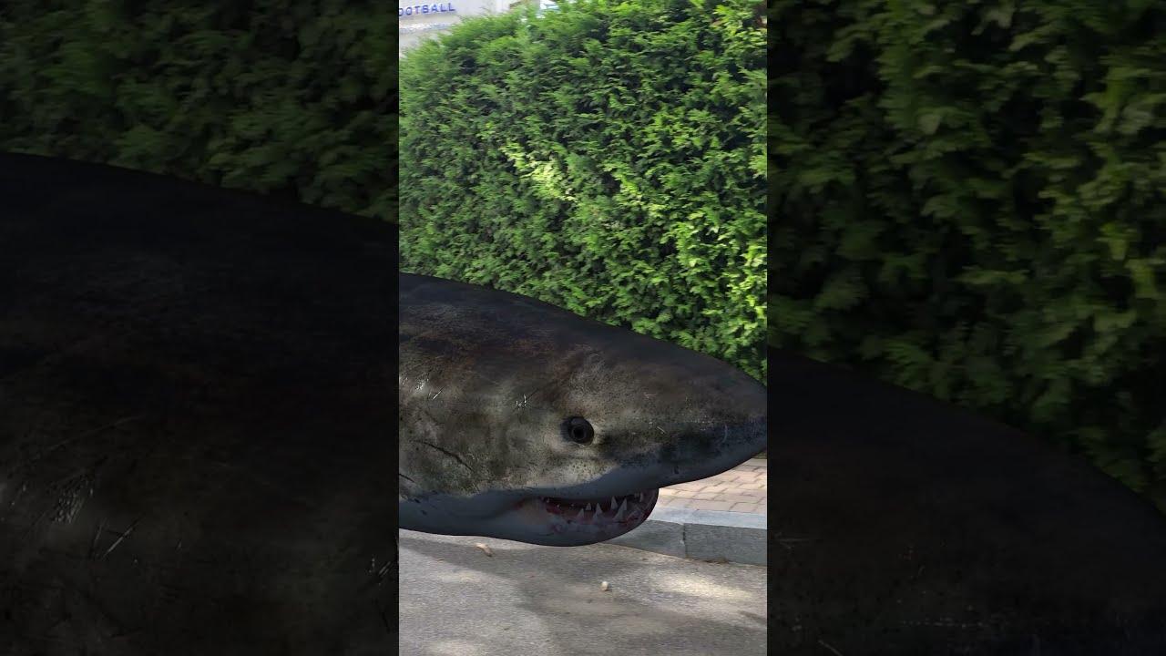 Monster Shark in the Park #Shorts