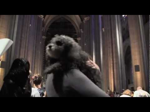 Blessing of the animals. World Animal Day at Saint John The Divine,  New York, 7 Oct.2012