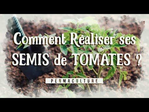 Comment réaliser ses semis de tomates ? #permaculture