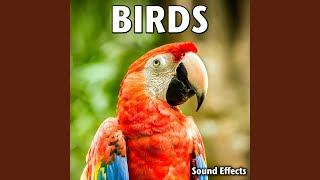 Caged Parrots and Other Birds Calling (Version 4)