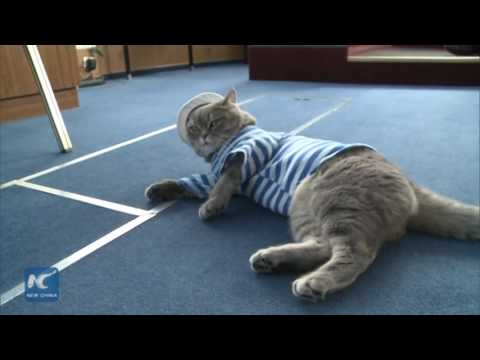 RAW: Russian sailor cats cruise for years between Moscow and St. Petersburg