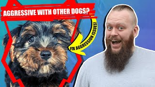 How To Train Aggressive YORKSHIRE TERRIER