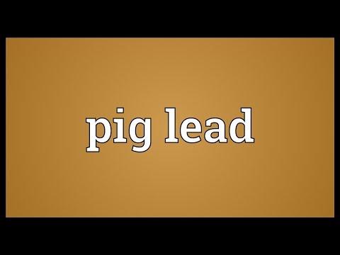 Header of pig lead