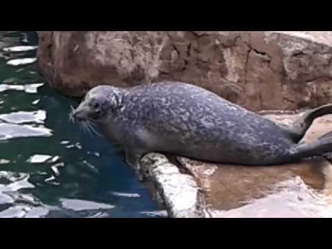 The Scottish sea life. Oban