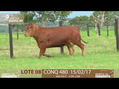LOTE 08 CONQ 480