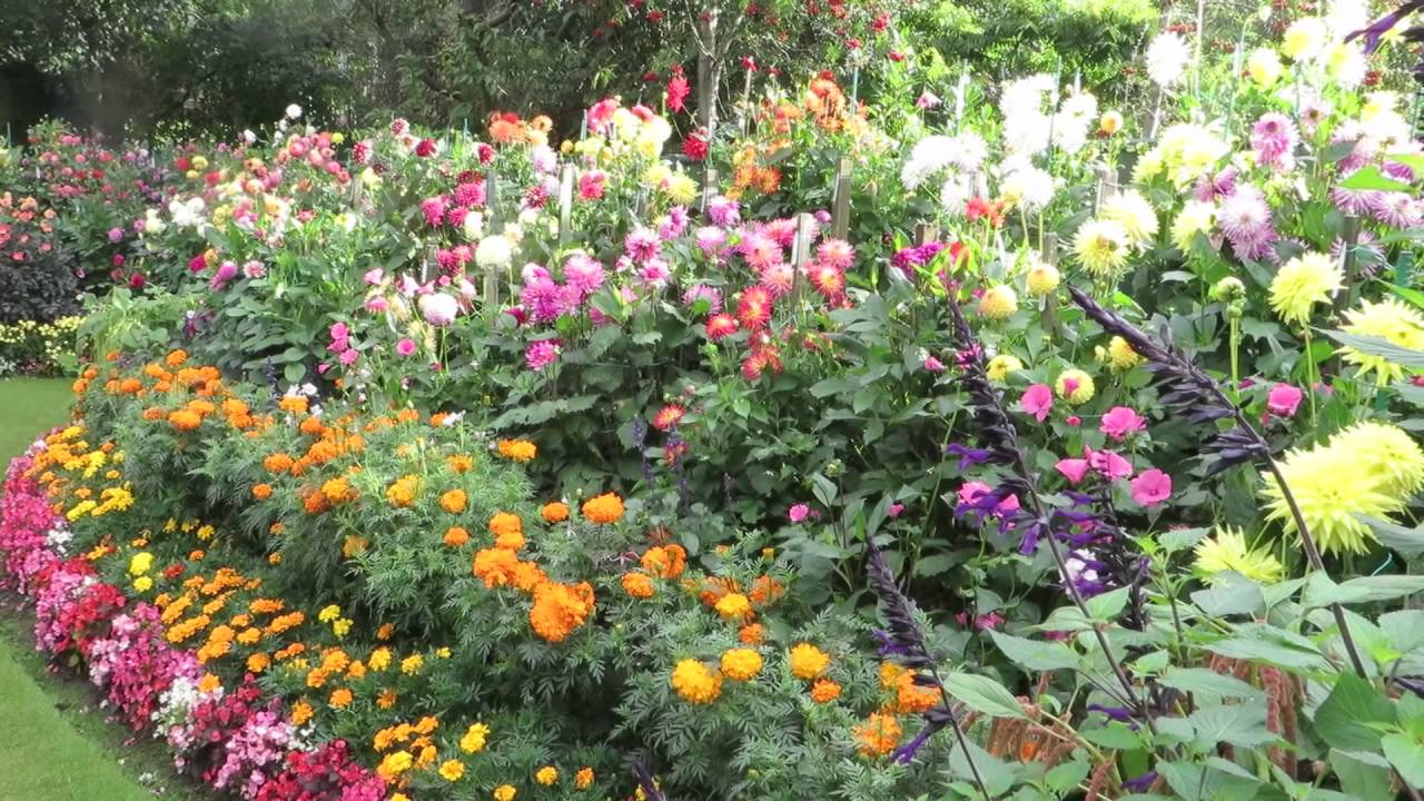 geoff & heather's dahlia garden