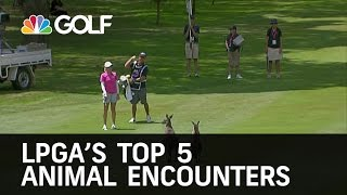 LPGA Top 5 Animal Encounters | Golf Channel