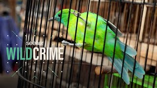 Inside the Illegal Songbird Trade in Indonesia