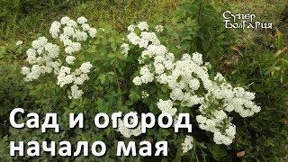 Сад и огород в начале мая. Природное земледелие. Жизнь в Болгарии